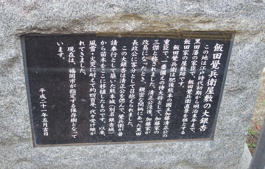 飯田屋敷大銀杏3