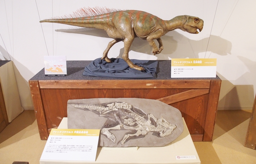 科学館恐竜展10