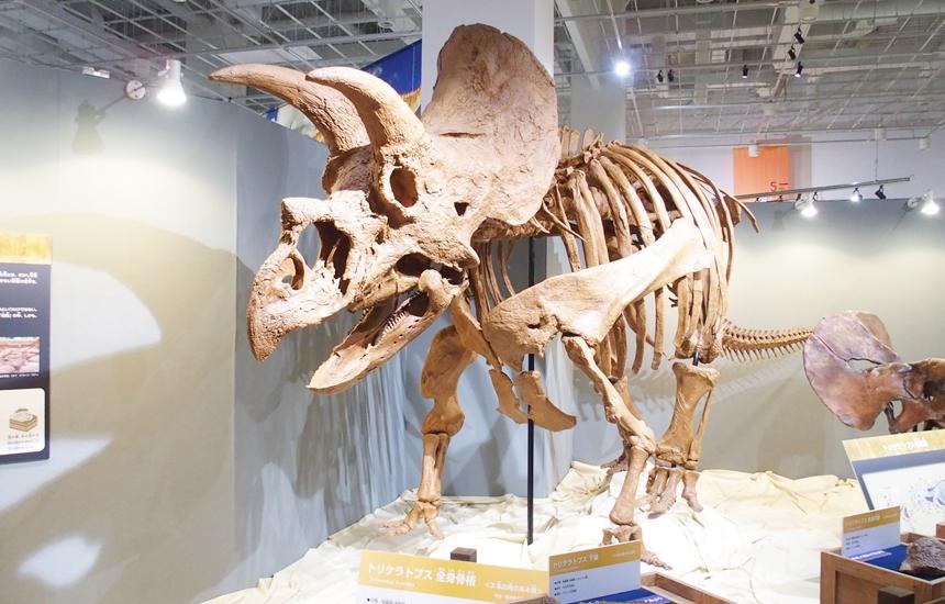 科学館恐竜展13
