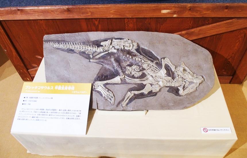 科学館恐竜展9