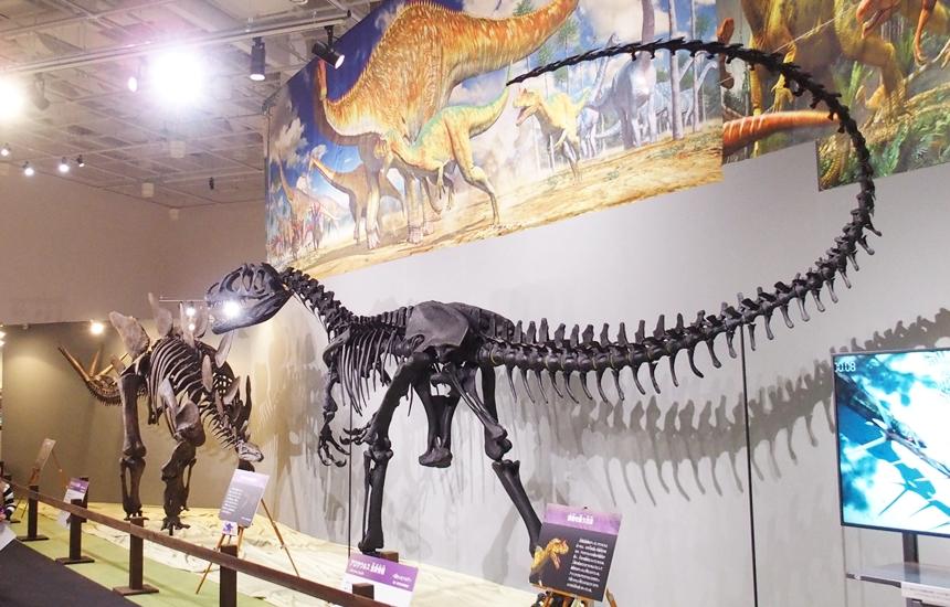 科学館恐竜展19