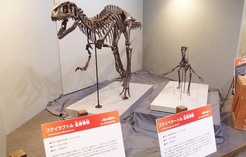 科学館恐竜展25